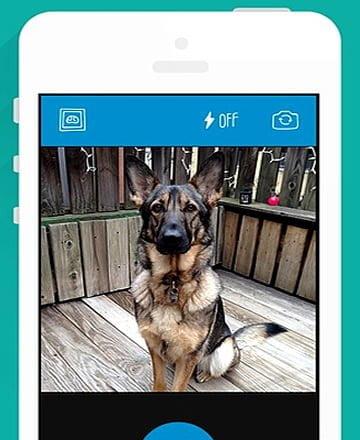 barkcam como tirar foto do cachorro