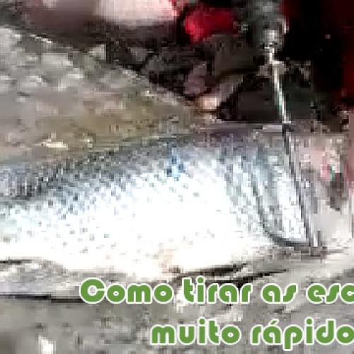 A maneira mais rapida e facil de tirar escamas de peixe