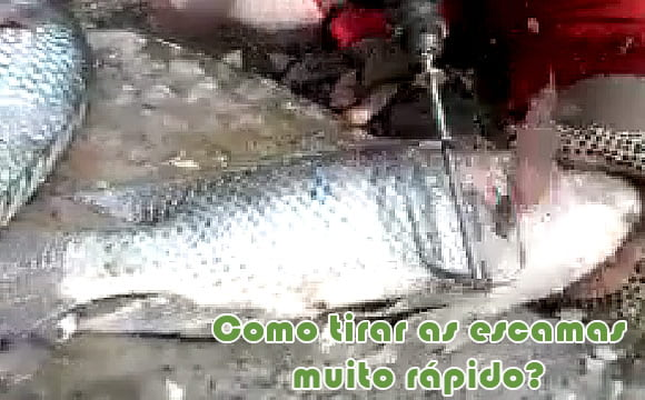 como tirar as escamas do peixe rapido