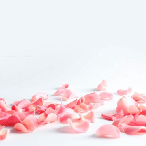 Como fazer água de rosas caseira para a beleza