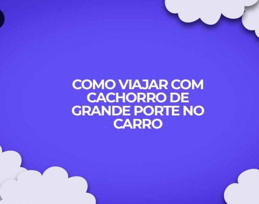 como fazer para viajar com cachorro de grande porte no carro